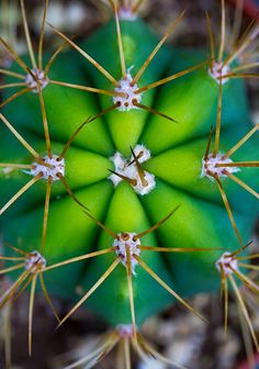 Cactus up close -Alan Shapiro