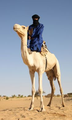 A berber astride his camel. Out Of Africa, West Africa, North Africa, Desert Life, Desert Dream, Tuareg People, Deserts Of The World, Arabian Nights, World Cultures