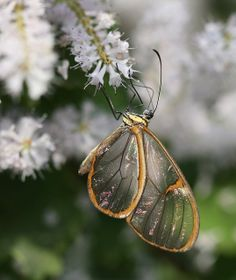 Butterfly 2 by ceferreira, via Flickr