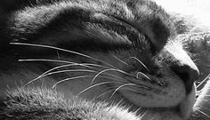 Cat in the Kitchen: Close-Up