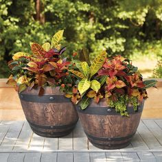 With a down-home, country-style feel, a resin barrel planter creates the perfect combination of elegance and simplicity to your outdoor or indoor living space. Check out our Woodford Barrel Fall Planters, Garden Planters, Planter Pots, Planter Ideas, Wood Planters, Terrace Garden, Succulents Garden, Whiskey Barrel Planter, Whiskey Barrels