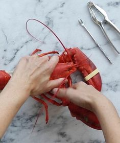 If you're shelling out for the good stuff, you want to be able to extricate every precious morsel. Follow these step-by-step instructions when you're hunkering down to eat lobster. Watch as Real Simple Food Director Sarah Copeland demonstrates.