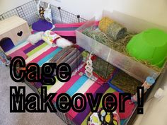 BEFORE AND AFTER:  Guinea Pig Cage Makeover and Haul Video!