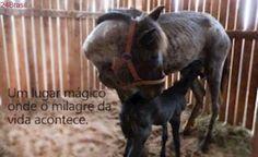 ONG realiza campanha para reconstruir santuário de cavalos destruído por temporal em Porto Alegre