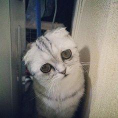 The saddest cat Baby Pi