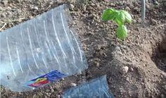 O tehnica ingenioasa de irigare a plantelor prin care putem economisi mari cantitati de apa | BZITV Garden Tools, Solar, Green, Crafts, Landscaping, Gardening, House, Agriculture, Plant