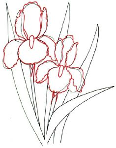 How to draw flowers, drawing flowers, paint flowers, iris drawing, plant drawing Iris Drawing, Plant Drawing, Painting & Drawing, Drawing Flowers, Flower Drawings, How To Draw Flowers, Flower Drawing Tutorials, Drawing Lessons, Drawing Techniques
