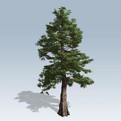 red cedar tree - Google Search
