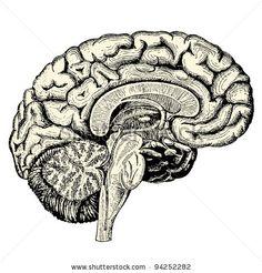 """Human brain - vintage engraved illustration - """"Manuel des hospitalière et des garde-malaldes""""  edited by  Librairie Poussielgue - Paris 190..."""