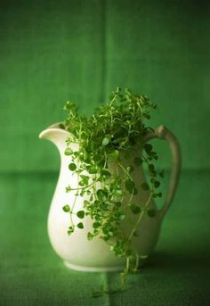 #green #plant #relaxing The fine living