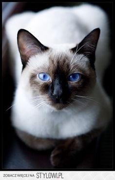 FrostMint-shecat- Medicine cat- Sexuality: Bi-Smart, quick thinker, agile and swift, she knows just what to do when a cat gets hurt.-  Apprentice: None- no mate/kits/crush- (NetherDragon)
