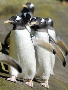 Petphoria, Penguinspg