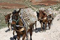 There is still one route left in the country where mail travels by mule. 20 Facts That Will Shatter Your Perception Of The U. Supai Arizona, Pine Ridge Reservation, Us Postal Service, Navajo Nation, Arizona Travel, Korean War, Post Office, Perception, Grand Canyon