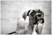bentley maryland dog photographer