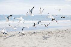 Imagem de beach, birds, and ocean Beach Aesthetic, Summer Aesthetic, Beach Vibes, Summer Vibes, Summer Sun, Nicolas Vanier, California Surf, The Dark Artifices, Beach Day