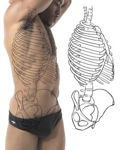 Practicing bone structure and landmarks of the torso.
