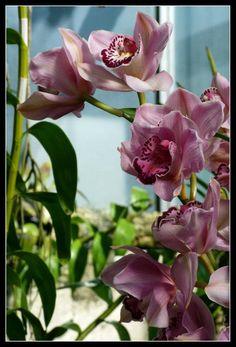Bonitas flores del jardín botánico de Madrid..!!