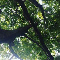 【cool.jaban.biz】さんのInstagramをピンしています。 《#japan#cool#photography #follow#follow4follow #followme#like4like #フォロー#相互フォロー #フォローミー #フォロバ#フォロバ100 #日本#文化#和風#和#tokyo #写真#写真好きな人と繋がりたい #風景#散歩#自然#nature #japanese#食事#クールジャパン#japanese#夏#森#木#日差し》