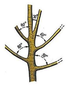 Тонкости весенней обрезки деревьев и кустарников | Дача - впрок