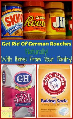 Get Rid Of German Roaches Naturally! With Items From Your Pantry!