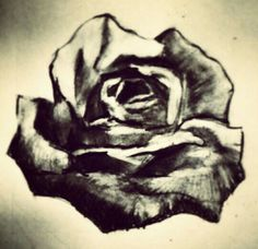 Rose - lapiz sobre papel