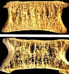 Bone.  Isn't it gorgeous!?