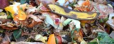 Reduce the amount of food scraps you throw out by adding to compost in soil. Improve your garden soil even without a composter. Organic Gardening, Gardening Tips, Sustainable Gardening, Composting At Home, Apartment Gardening, How To Make Compost, Making Compost, Bokashi, Small Gardens