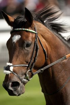 RECORD-BREAKING Frankel has won 13 straight races which could make him arguably the greatest race horse ever.