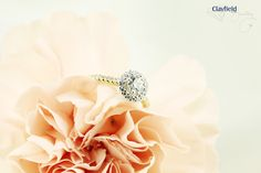 Stunning new solitaire with gorgeous diamond band and halo by Clayfield jewellery in Nundah Village, North Brisbane. Fine Jewelry, Jewelry Making, Diamond Jewellery, Diamond Bands, Brisbane, Diamond Engagement Rings, Halo, Wedding Rings, Jewels