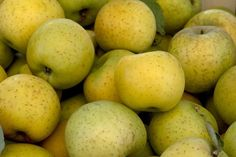 GoldRush apples grown by Michael Cirone in San Luis Obispo, at the Santa Monica farmers market.