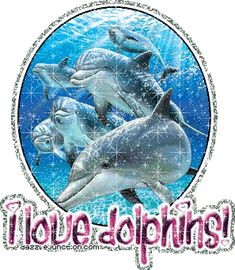 dolphin animated glitter graphics | ... dazzlejunction.com/graphics-animal/animal-lovers/i-love-dolphins-1.gif