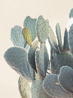 Cactus - Joshua Tree by Jane Wilder