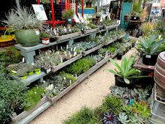 """Flowerland in Albany, CA, was another vacation visit based on a recommendation from Kelly , who mentioned she thinks of it as """"Flora Grubb ..."""