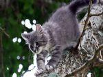 a cute wild kitten