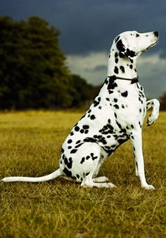 # animals # the best dog i ever owned.. looks just like him!!