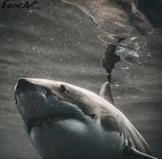 Sharks, Whale, Animals, Whales, Shark, Animaux, Animal, Animales, Animais