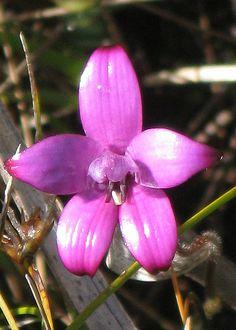 purple enamel orchid   by kimborow