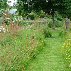 Wildflower meadow. Grassentuin - Chris Ghyselen - tuinarchitect
