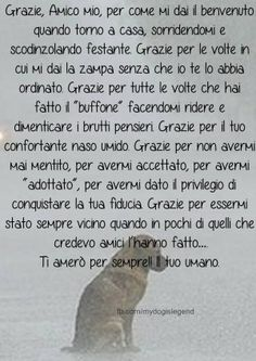 ❤ Grazie Paco e Milo❤ Dog Lover Quotes, Dog Quotes, Dog Lovers, I Love Dogs, Puppy Love, Cute Little Puppies, My Animal, Dog Friends, Animals And Pets