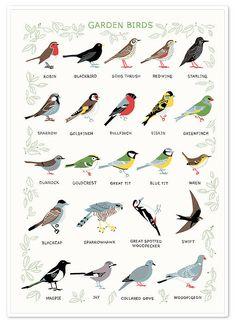 'Garden Birds' Screen Print Havens fugle