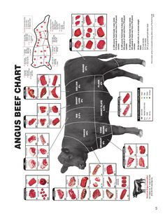 beef ribs for bbq from where on steer Livestock Judging, Showing Livestock, Plan Vida, Beef Cuts Diagram, Raising Cattle, Beef Round, Dairy Cattle, Cattle Farming, Beef Cattle