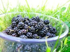 mulberries and mulberry recipes