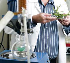 Cientistas e médicos brasileiros estão testando em humanos o potencial da planta Aveloz, para o tratamento do câncer. É possivelmente a pri...