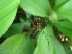 Aranha.  Jardim Botânico - Rio de Janeiro
