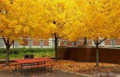 Yellow is beautiful!