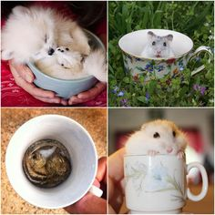 Cute and fun, animals in cups http://veu.sk/index.php/aktuality/1656-roztomile-a-zabavne-zvieratka-v-salkach.html #cute #fun #animals #cups
