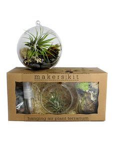 Look what I found on #zulily! Hanging Air Plant Terrarium by MakersKit #zulilyfinds