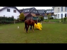 Queenie entdeckt eine gelbe Plan Videos, Plane, Horses, How To Plan, Youtube, Animals, Yellow, Guys, Animales