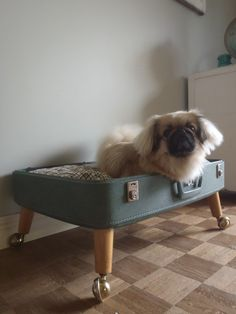 The look! Luvable Luggage Pet Bed  by lovenostalgicwhimsy