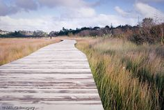Daisy Hardwick Boardwalk, Tauranga, New Zealand  -- Reserve behind Bellevue  #thingsimiss